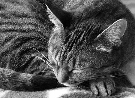 kočka III