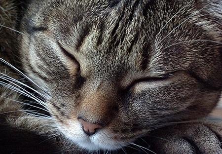 kočka IV